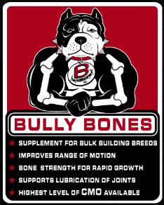 Blue Pitbulls/Bully Pups//Massive Kennels,GA/Blue Pitbull Puppies