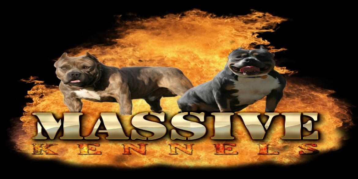 Blue Pitbulls/Bully Pups//Massive Kennels,GA/Blue Pitbull Puppies
